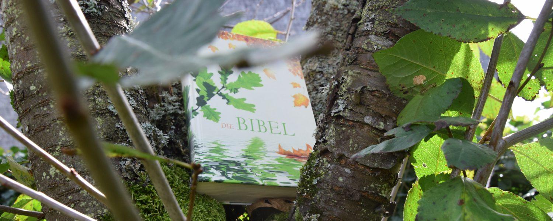 Bibelwahrheitsfinder, die des Weges sind…